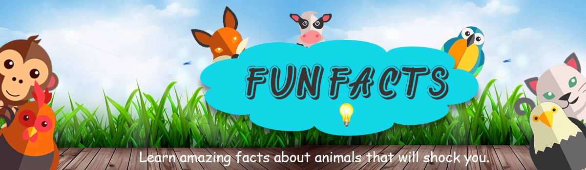 Interesting facts about animals- Yebo